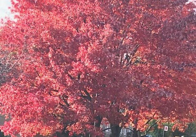 Les récoltes d'automne !!!!